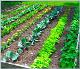 庭で野菜を栽培するには? - トルコ