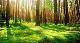 İllere Göre Ormanlar